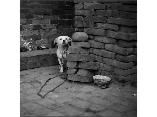 Andrew Ross: Humanity: White Dog, Pingyao